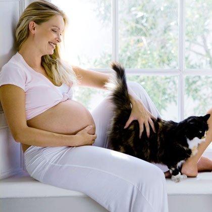 Riesgo contagio toxoplasmosis gatos a mujeres embarazadas. Veterinarios Coruna El Arca